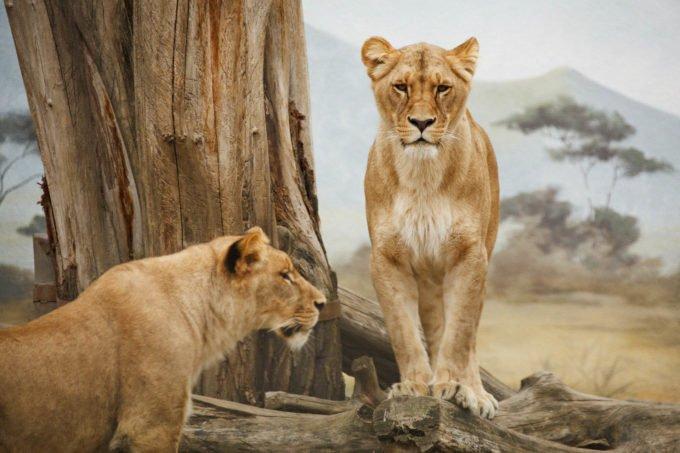 Afryka | Fajne Podróże 110