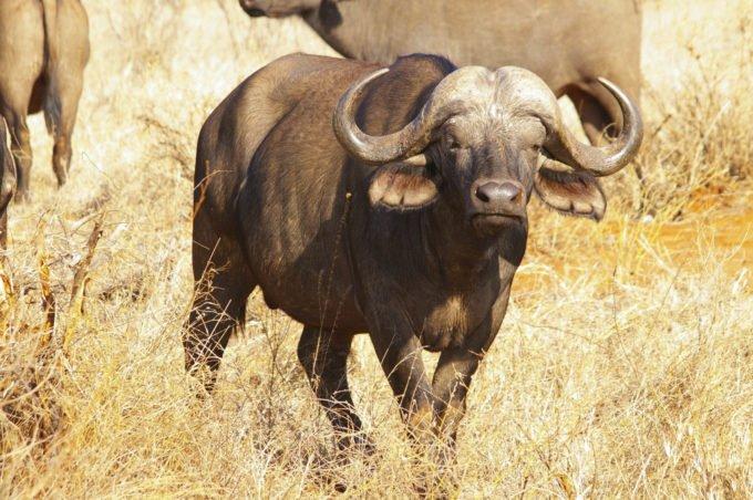 Afryka | Fajne Podróże 118