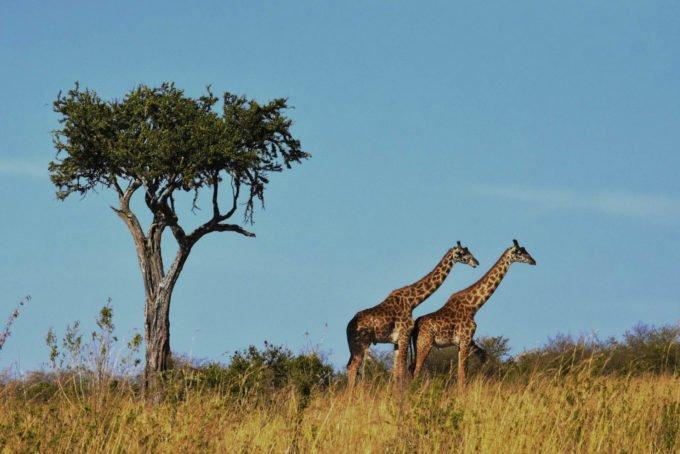Afryka | Fajne Podróże 120