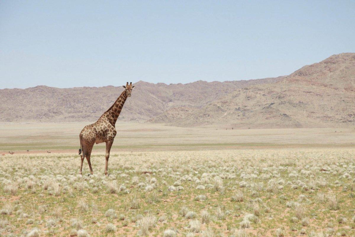 Afryka   Fajne Podróże 124