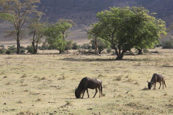 Afryka | Fajne Podróże 131