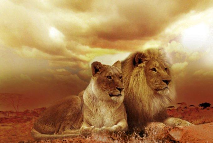 Afryka | Fajne Podróże 162