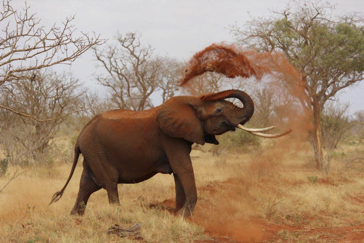 Afryka   Fajne Podróże 171