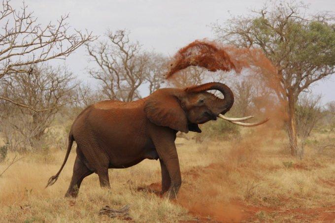 Afryka | Fajne Podróże 171