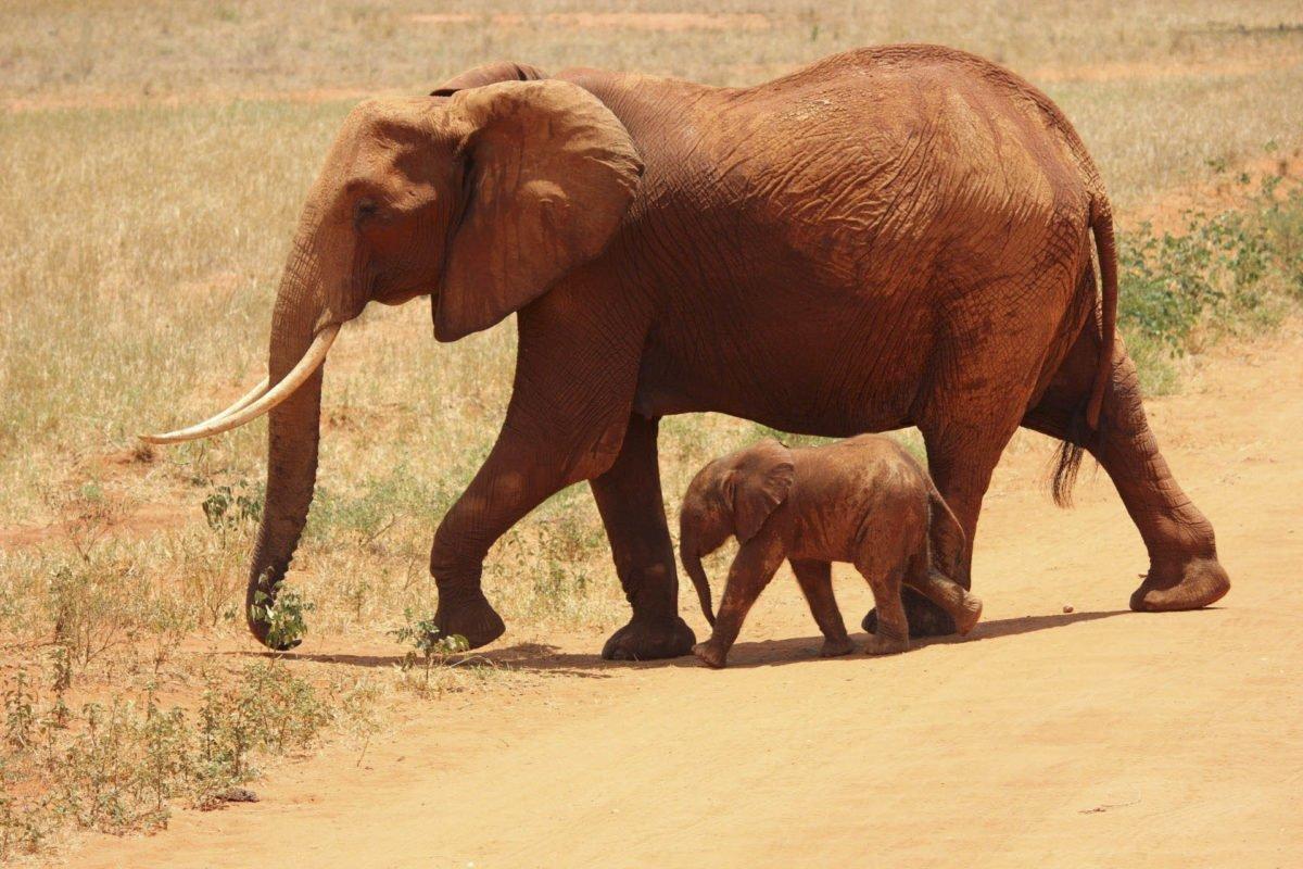 Afryka   Fajne Podróże 178