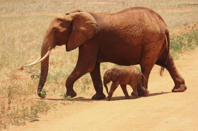 Afryka | Fajne Podróże 178