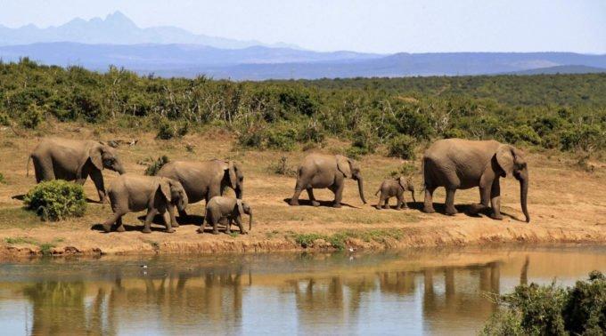 Afryka | Fajne Podróże 179