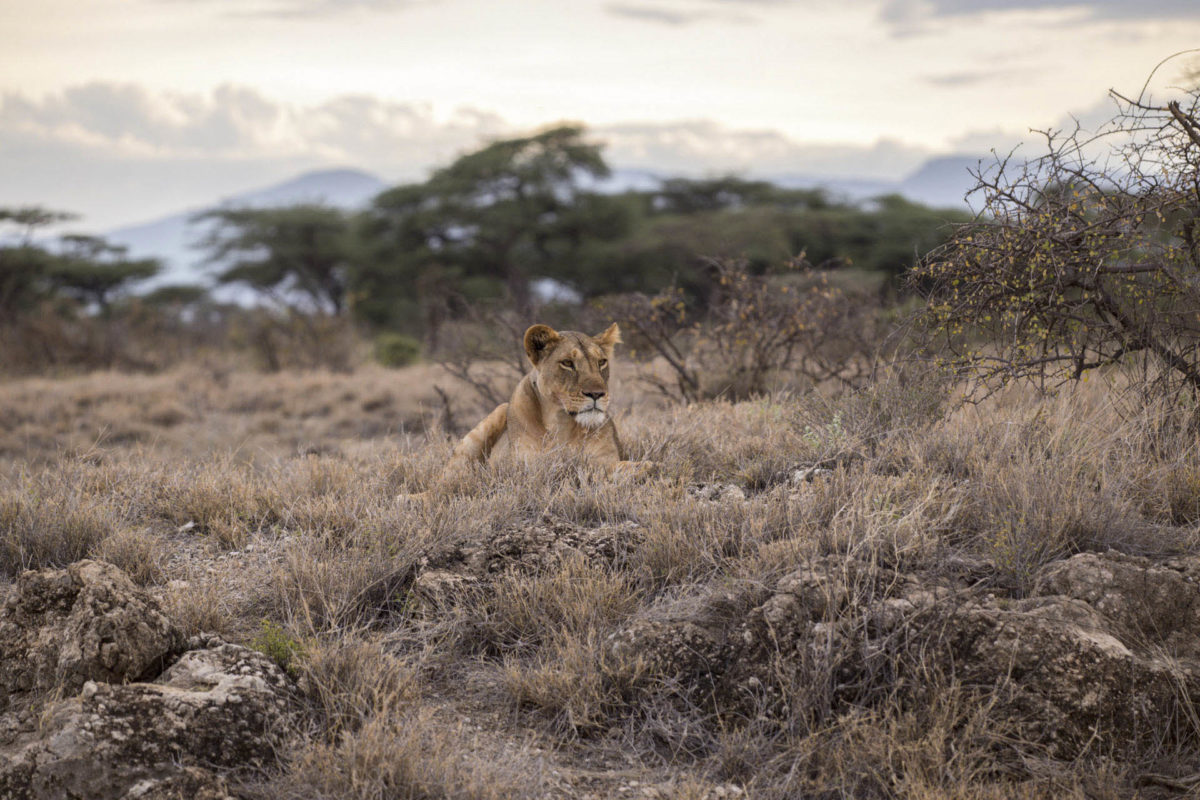 Afryka   Fajne Podróże 1