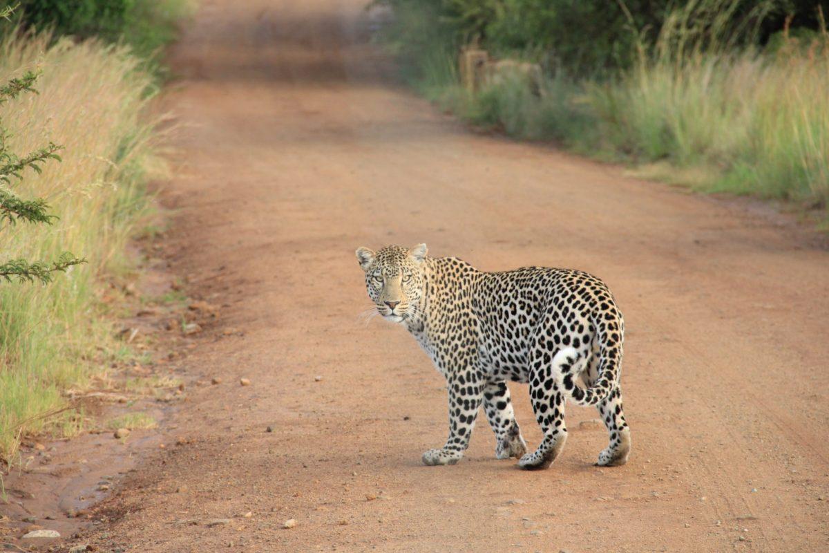 Afryka   Fajne Podróże 41