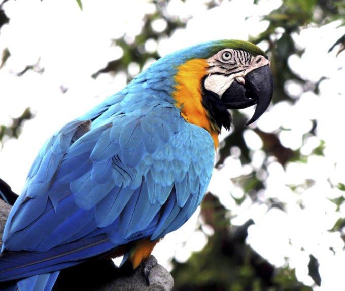 Африка | попугай