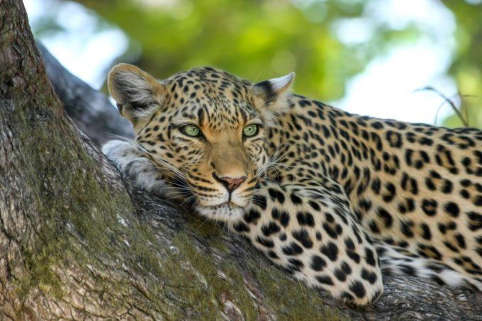 Afryka | Fajne Podróże 48