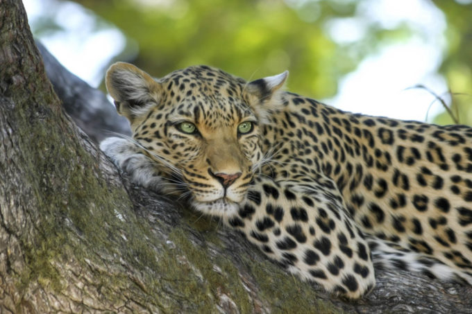 Afryka | Fajne Podróże 49