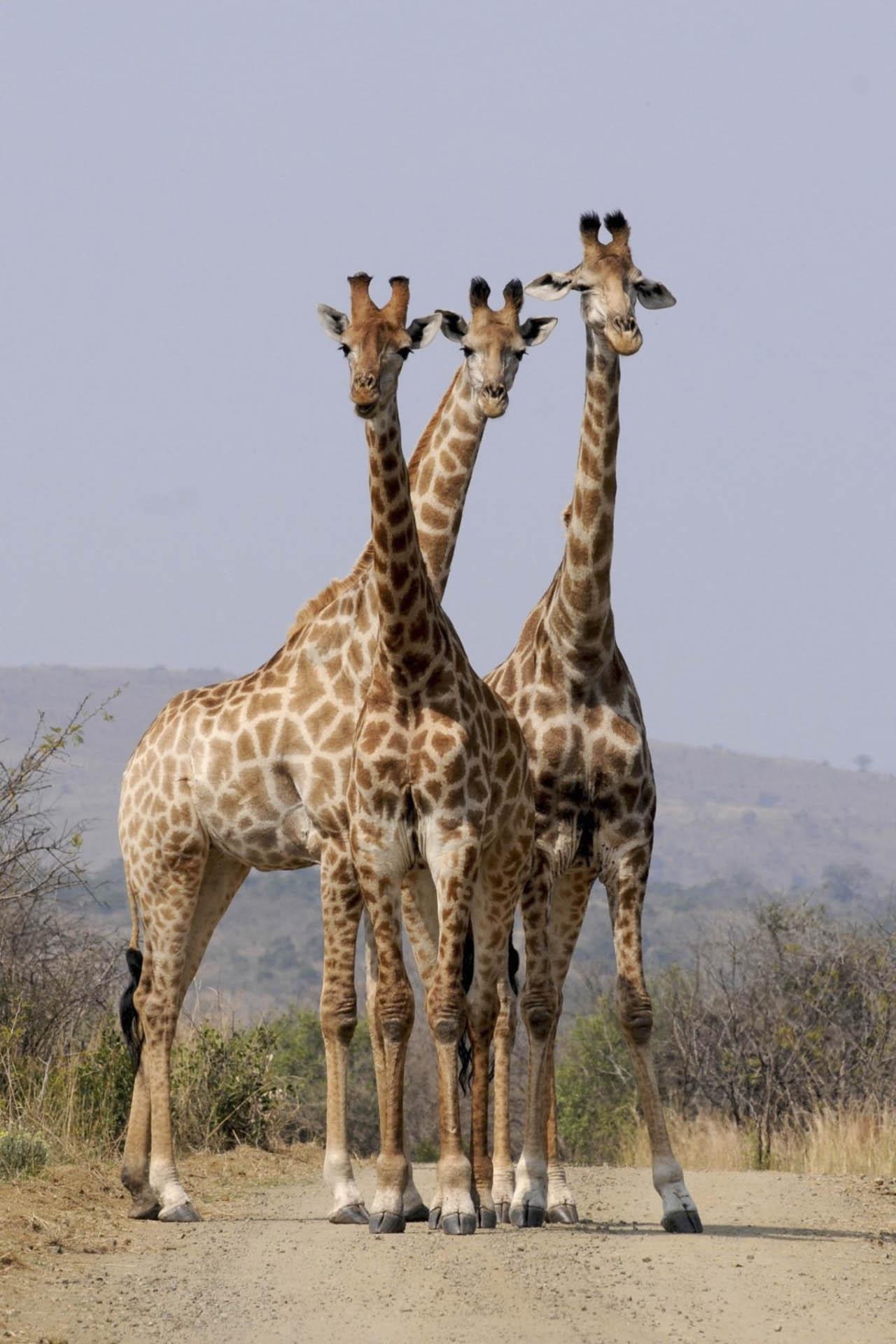 Afryka   Fajne Podróże 51