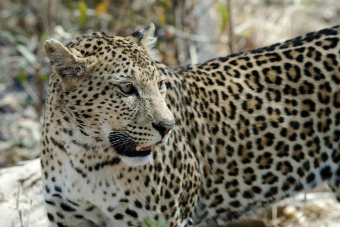 Afryka | Fajne Podróże 55