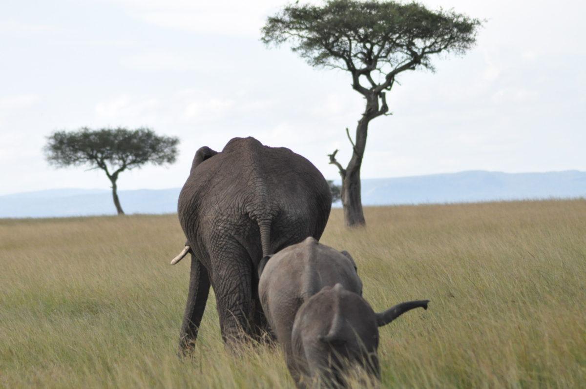 Afryka   Fajne Podróże 57