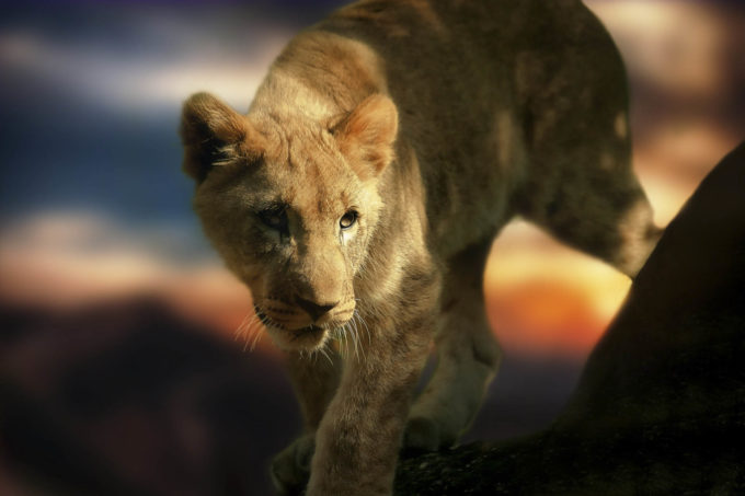 Afryka | Fajne Podróże 57