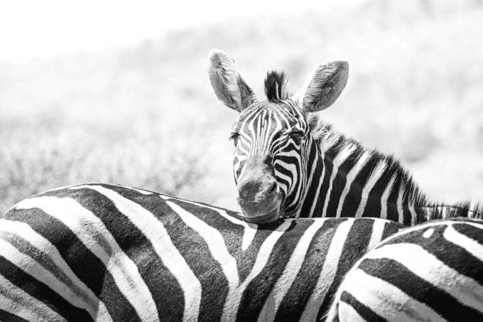 Afryka | Fajne Podróże 71