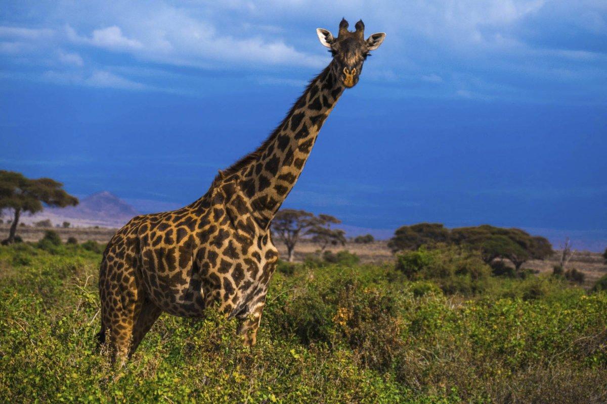 Afryka   Fajne Podróże 77