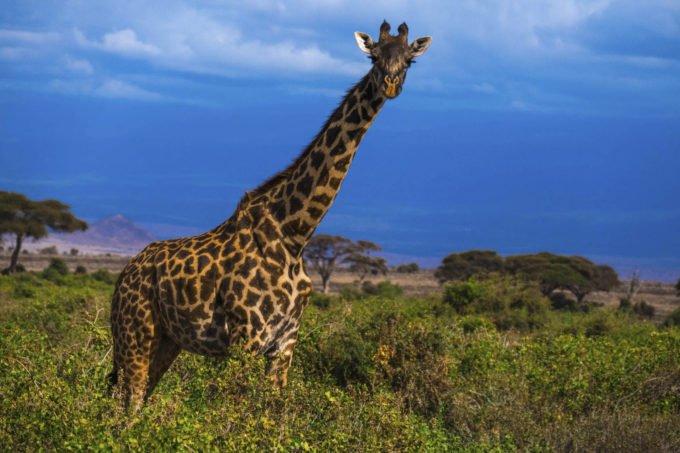 Afryka | Fajne Podróże 77