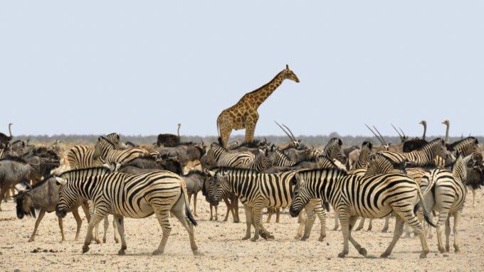 Afryka | Fajne Podróże 80
