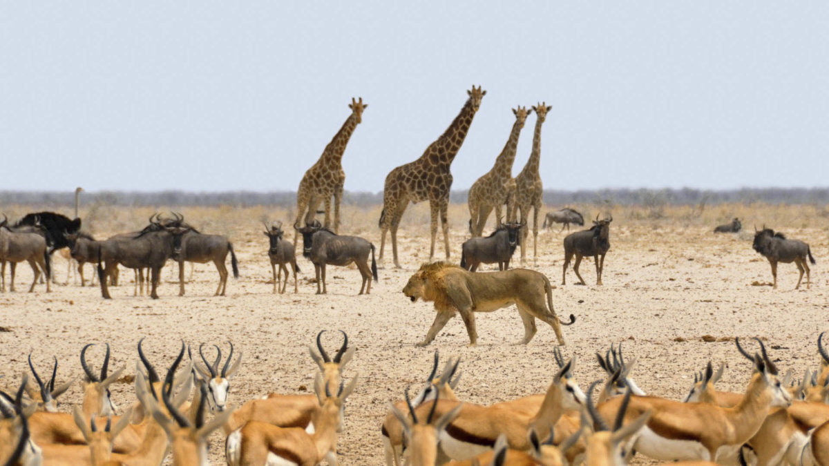 Afryka   Fajne Podróże 81