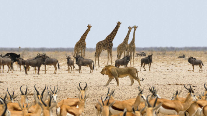 Afryka | Fajne Podróże 81