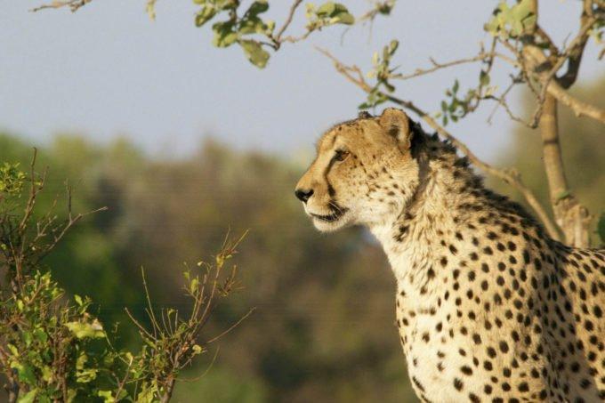 Afryka | Fajne Podróże 82