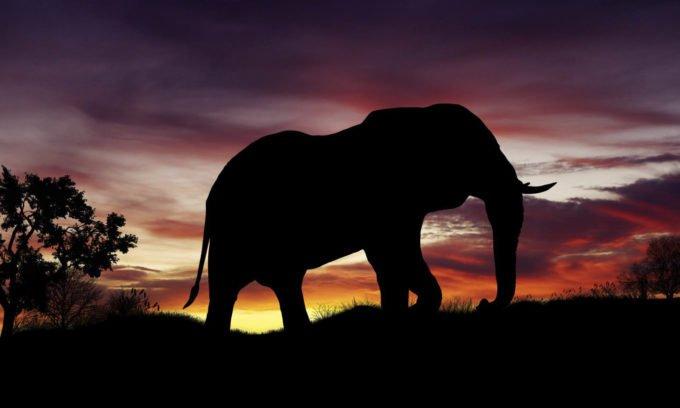 Afryka | Fajne Podróże 92