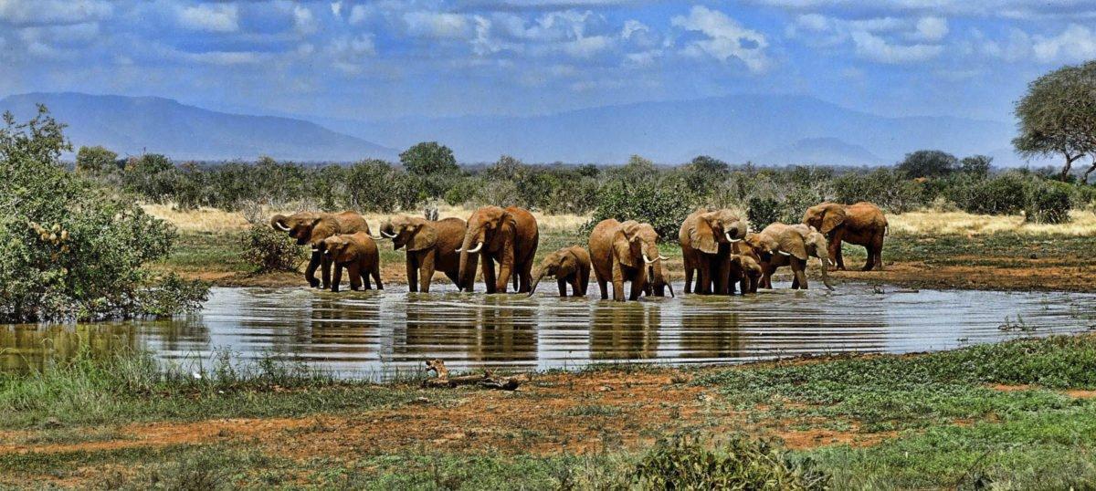 Afryka   Fajne Podróże 99