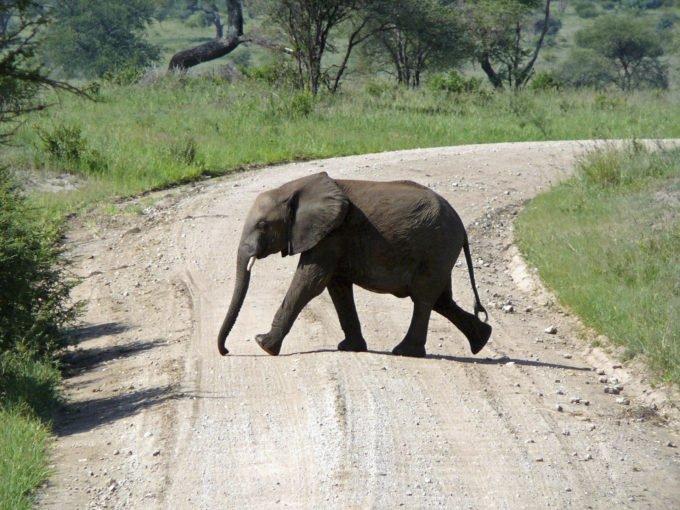 Afryka | Fajne Podróże 105