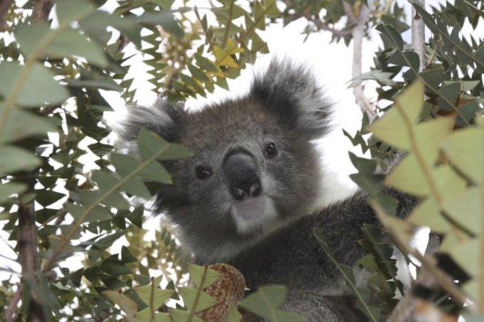 australia-oceania-10