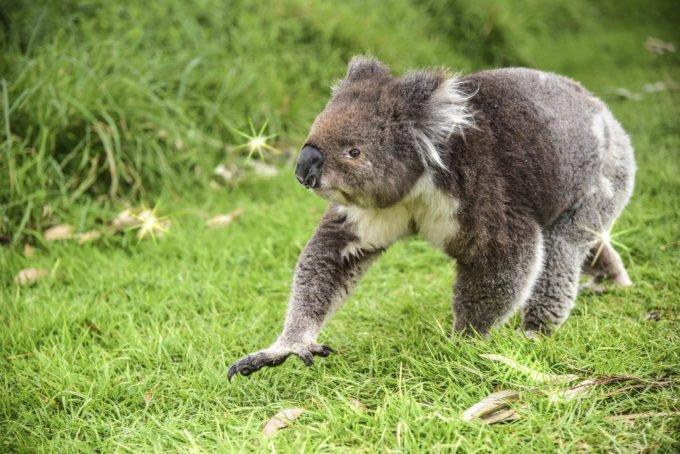 australia-oceania-22