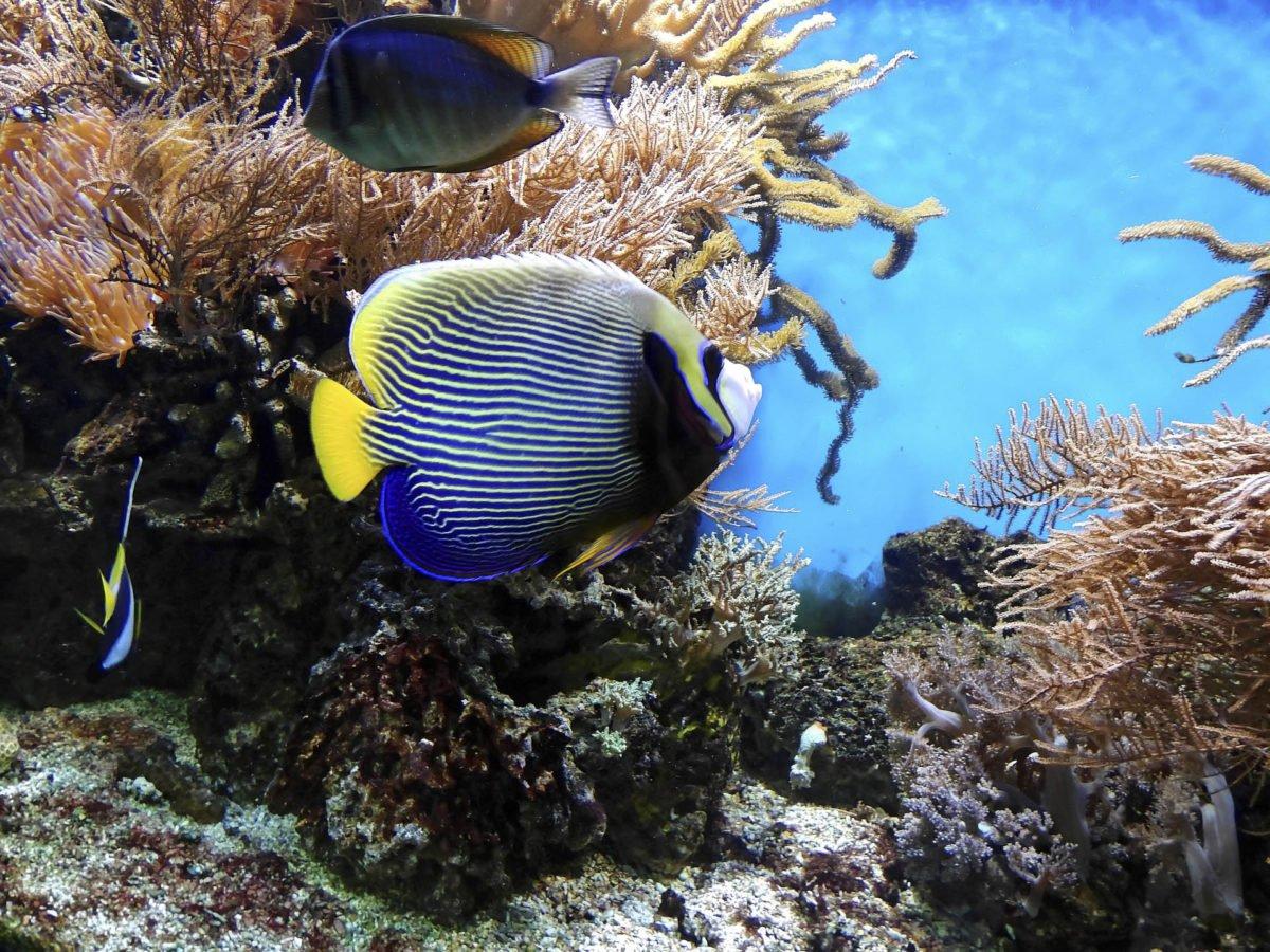 australia-oceania-43