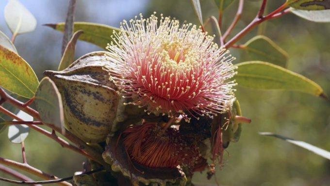 australia-oceania-50