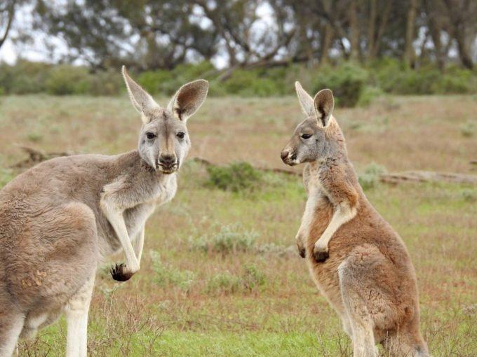 australia-oceania-61