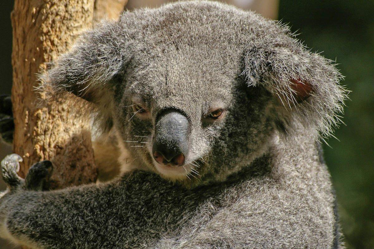 australia-oceania-62