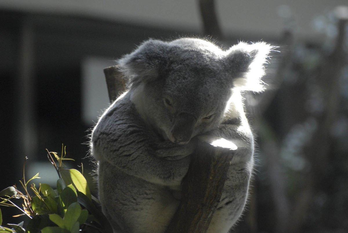 australia-oceania-63