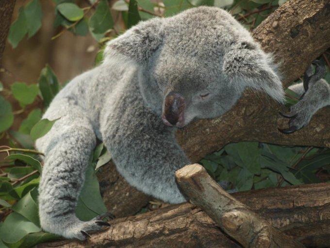 australia-oceania-65