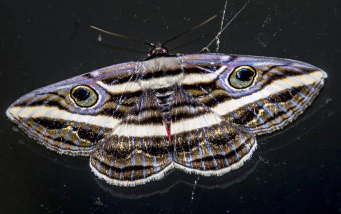 australia-oceania-79