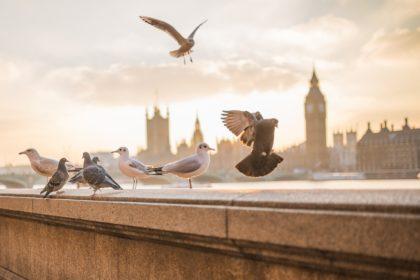 Co warto zobaczyć w Londynie w jeden dzień – Najlepsze Atrakcje Turystyczne