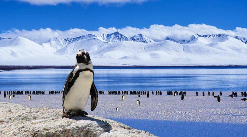 Ciekawostki dla dzieci o Antarktydzie