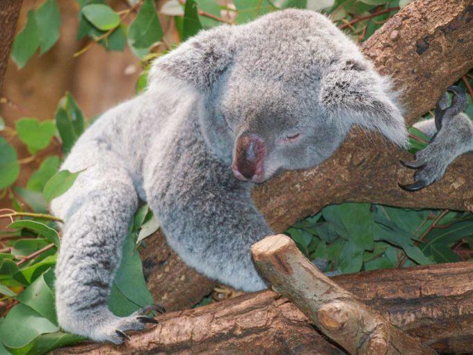 Australia informacje i ciekawostki