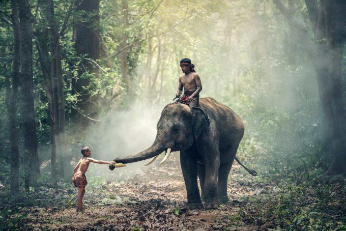 dziecko koło słonia