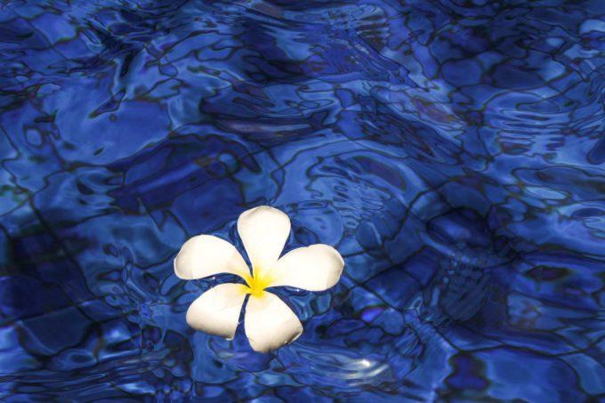 kwiat na wodzie