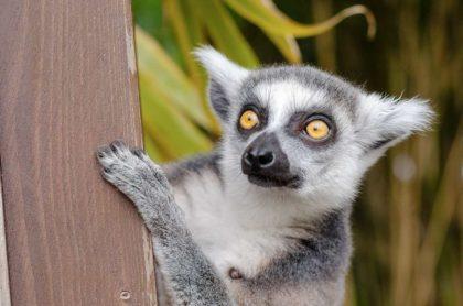 Madagaskar wyspa ciekawostki