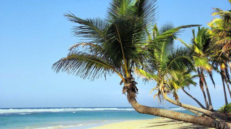 palmy i plaża