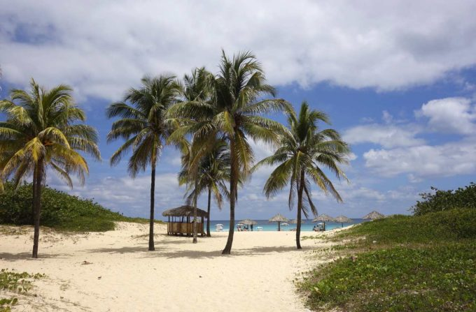 palmy na piasku