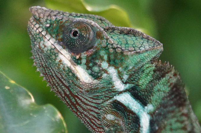 zwierze z Madagaskaru
