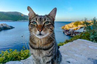 30+ najlepszych ciekawostek i informacji o Majorce