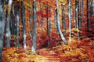 24 niesamowite ciekawostki o drzewach i drewnie